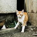 写真: 猫撮り散歩1993