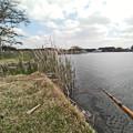 写真: 野池で釣り