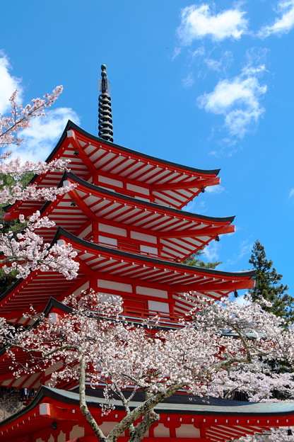 Photos: 桜と忠霊塔