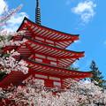 写真: 桜と忠霊塔