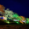 Photos: 夏井千本桜ライトアップ