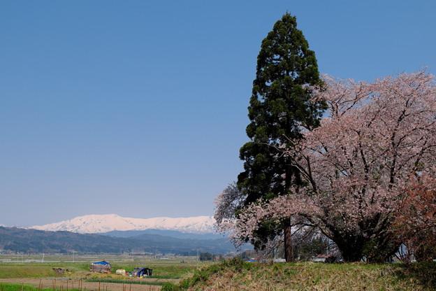 Photos: 北国の春