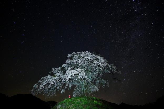 夜桜と北天の星々
