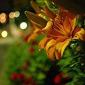 Photos: 20090602_195427