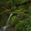 写真: 冷湖の霊泉