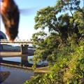 写真: クマンバチ来襲
