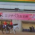 写真: 20171112_京都競馬場_0431