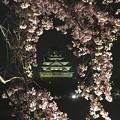 写真: 夜之春