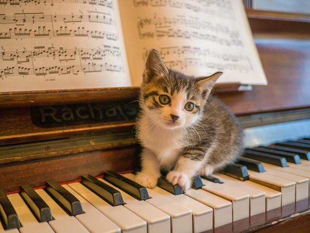新入りを、鍵盤に載せてみたら