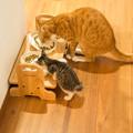 写真: 初めてこの二匹が並んで餌を食ってた
