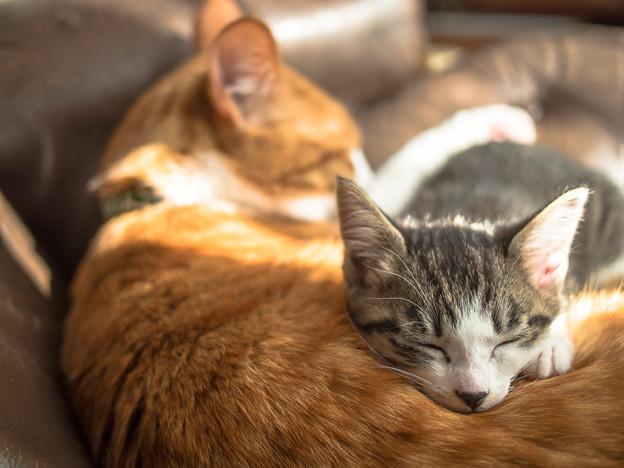 一番好きな枕
