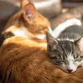 Photos: 一番好きな枕