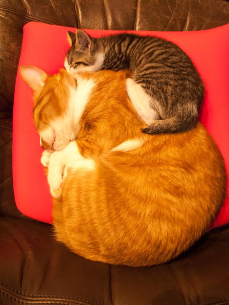 座布団の上に、猫座布団