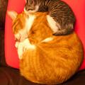 Photos: 座布団の上に、猫座布団