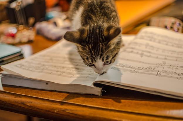 Photos: 勉強の邪魔をする