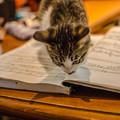 写真: 勉強の邪魔をする
