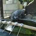 亀さんの手水舎