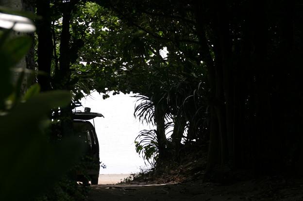フク木並木から海