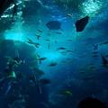 写真: 相模湾大水槽