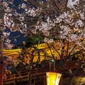 Photos: 月の松を背景に・・・