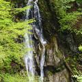 写真: 西沢渓谷をあるく。