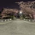 駿府城公園 西門橋 夜桜 360度パノラマ写真