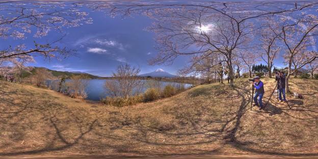 田貫湖 桜 360度パノラマ写真(1)