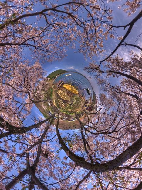 田貫湖 桜 Little Planet