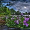 Photos: 駿府城公園 紅葉山庭園 花菖蒲 360度パノラマ写真