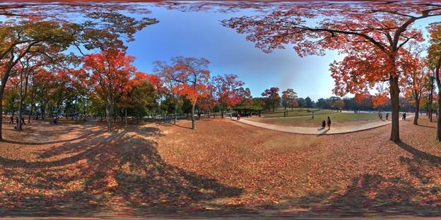 奈良公園 紅葉〈3〉 360度パノラマ写真