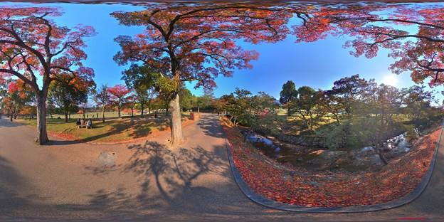 奈良公園 紅葉〈5〉 360度パノラマ写真
