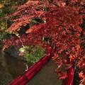 写真: 森町 小国神社 紅葉 赤橋付近 ライトアップ (2)