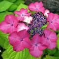 Photos: 赤と緑、チョイ紫
