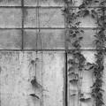 写真: ブロック塀