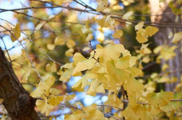 秋は、終わり 冬へ