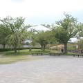 さくらの山公園