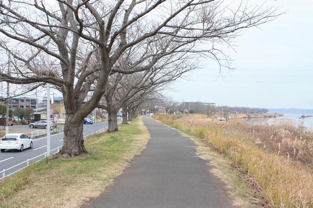 霞ヶ浦の歩道
