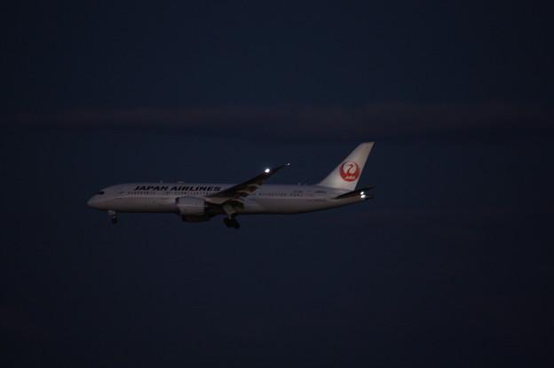 日本航空 JAL ボーイング787-8