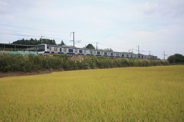 黄金の稲を行くE531系 (1)