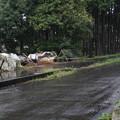 雨が降っている光景 (3)