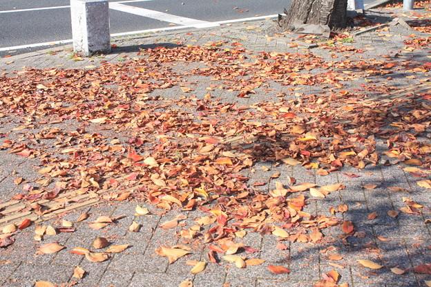 付近に落ちていた落ち葉