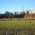 秋の田園風景を走りゆくE531系