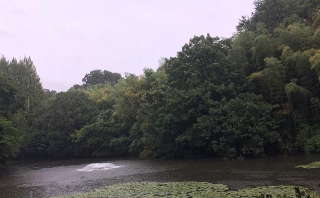 写真: 雨の公園カワセミくん現れず(涙)