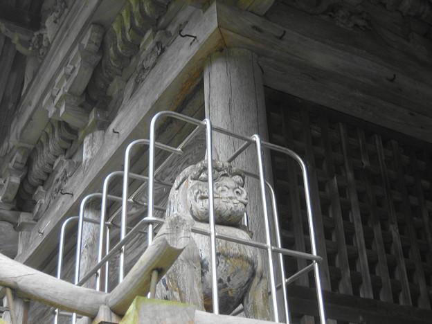 非常に珍しい神殿木像狛犬吽さん。
