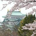今年の名古屋城~♪♪