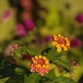 写真: 秋の彩り~