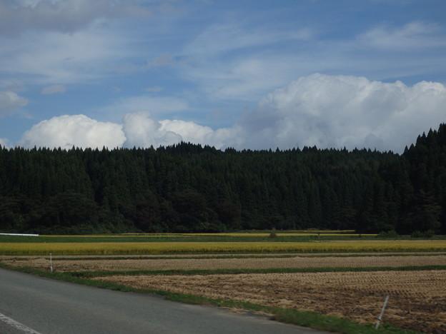稲刈りの終わった田んぼとまだの田んぼと