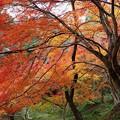 Photos: 勝持寺