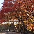 Photos: 毘沙門堂