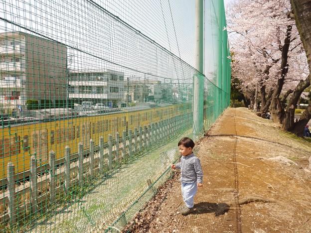 桜と電車とぼく。